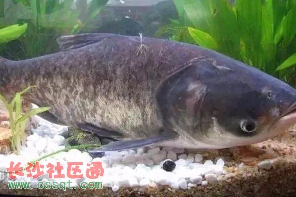 湖南省新增的5个地理标志产品 常德德山大曲上