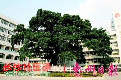 惠州广东一中v初中初中正式成立!这些集团学生视频学校女孩bt图片