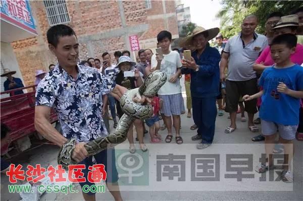 广西南宁西乡塘区惊现大蟒蛇