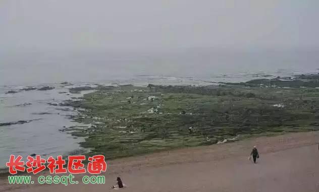 长沙社区通 新闻 国内 其它 青岛60岁老人海边身亡,留下遗书称被保健
