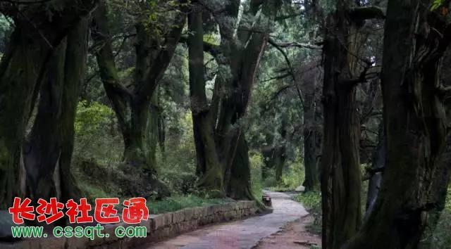 七曲山国家森林公园 邛崃南宝山