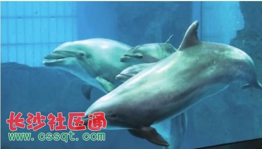 海豚宝宝降生了 长沙海底世界海豚家族成员增至8只