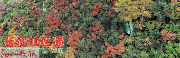 天池山森林风景区--封山闭园 7.神灵寨风景区--封山闭园 8.