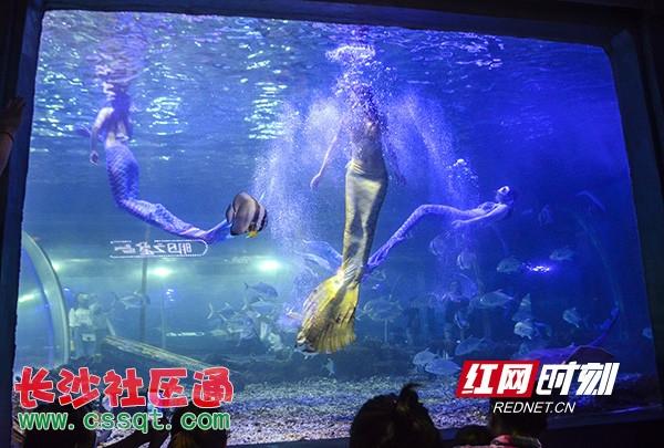 """长沙海立方推出""""六一""""海洋嘉年华 上演城市海洋show"""
