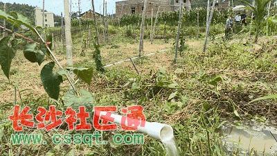 """超过37万亩农田""""喊渴""""  ▲在 龙川县细坳镇月光正村,受近期旱情影响"""