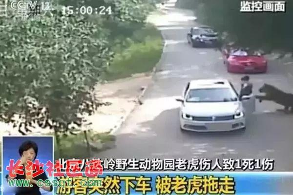 """北京野生动物园游客自驾区下车摘山楂?园方回应""""正调查"""""""