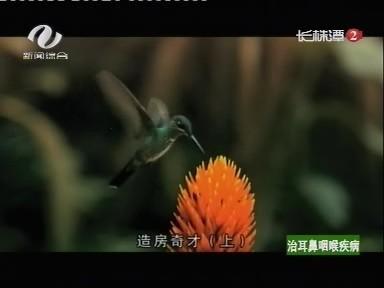 长株潭二台株洲新闻综合频道