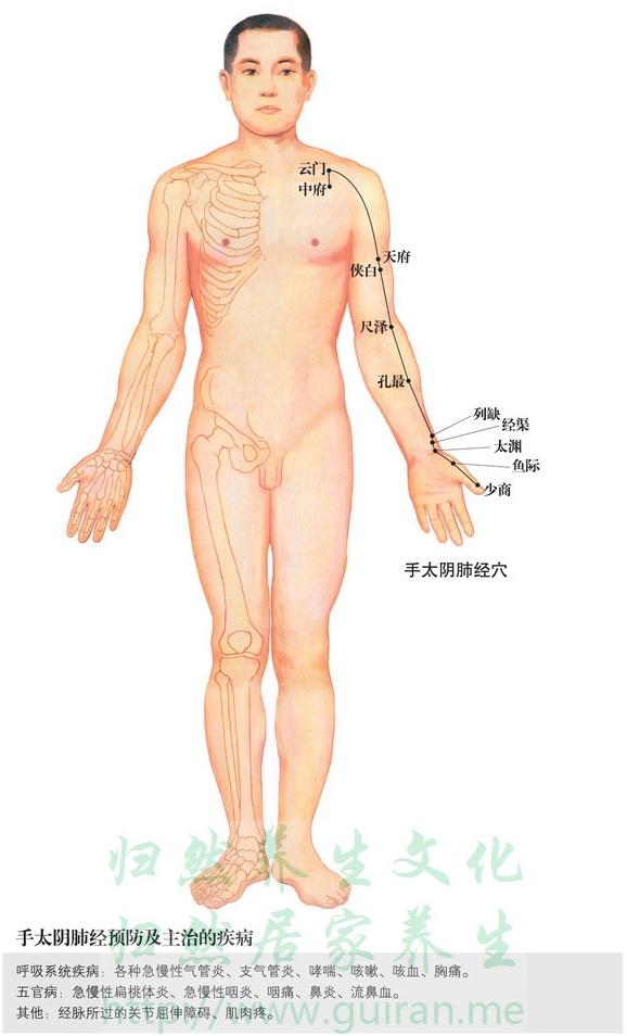 〖生理解剖〗 桡侧腕屈肌腱的外侧,拇展长肌腱内测;有桡动、静脉;