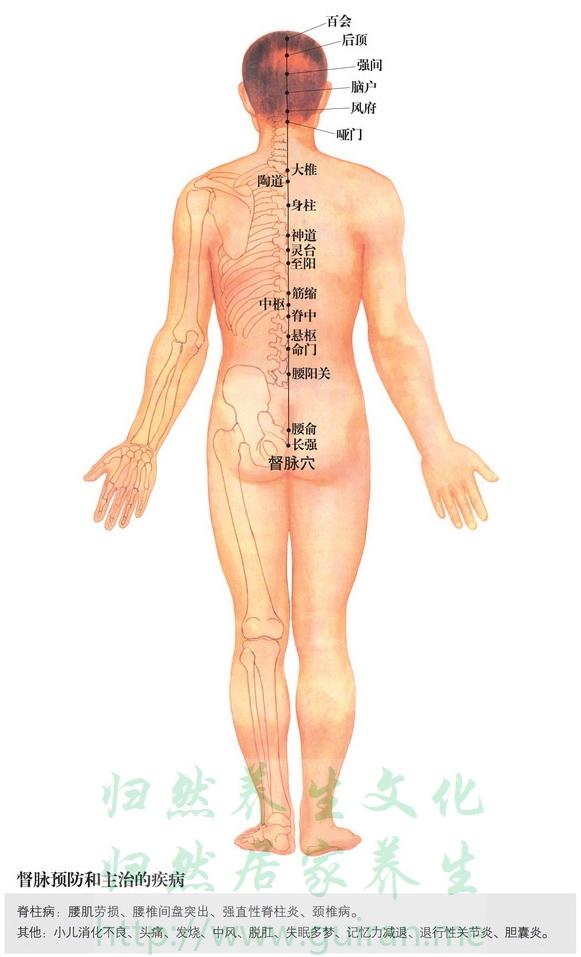 〖生理解剖〗在浅筋膜、帽状腱膜 布有枕大神经分支.   穴位图:
